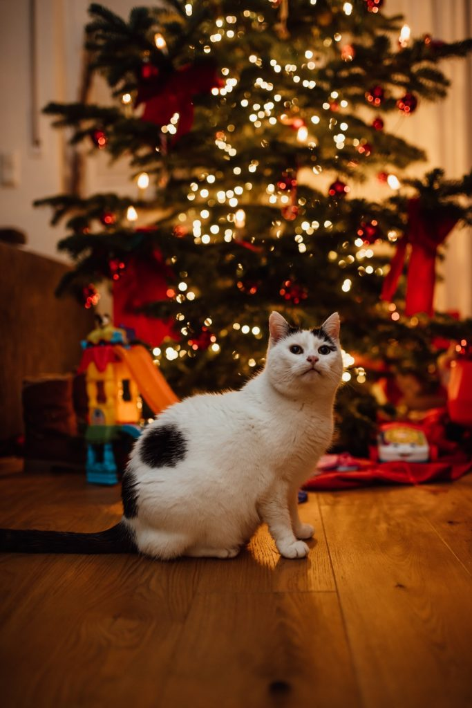 Katze Weihnachtsbaum weiß schwarz leuchten Regensburg