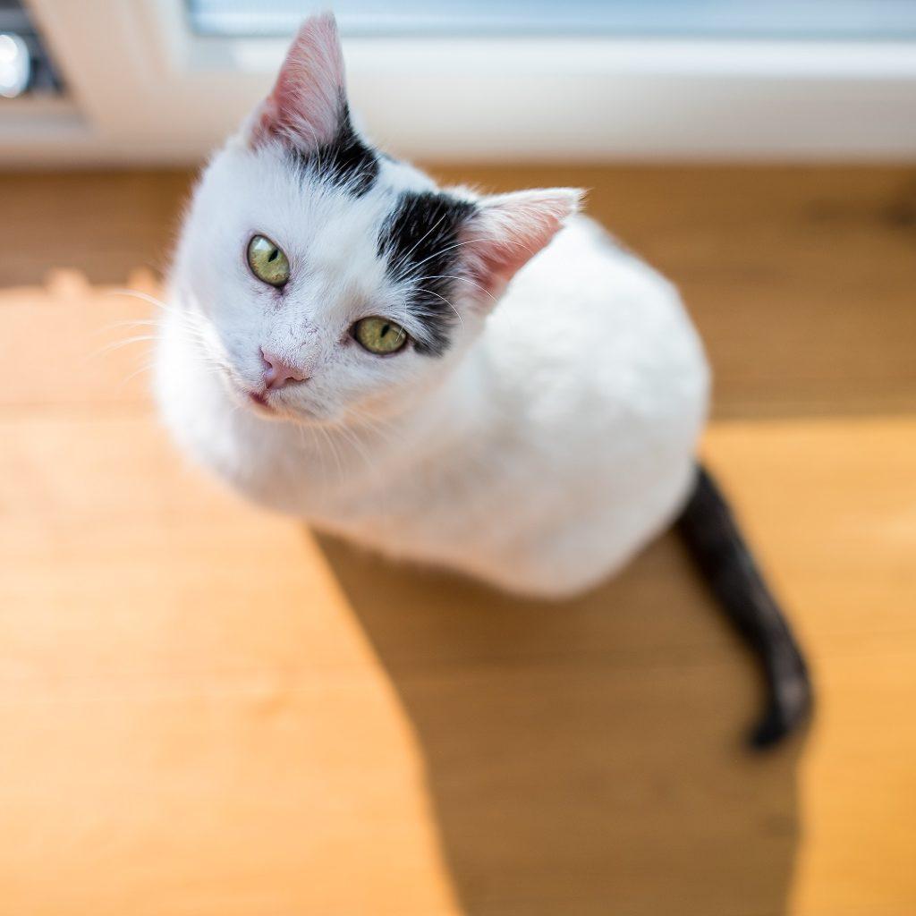 Katze Portrait Grün Thalmassing