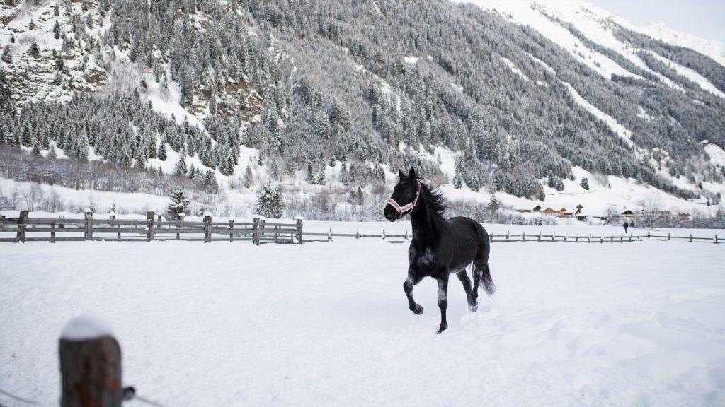 Pferd Schnee Schwarz Tier Tirol