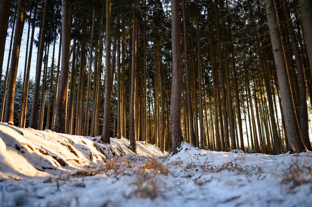Wald Thalmassing